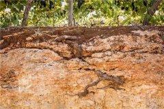土壤养分检测仪都有哪些特点功能