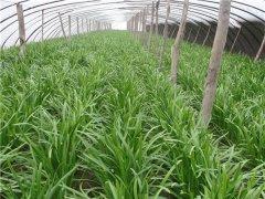 土壤水分速测仪适合农田水分监测