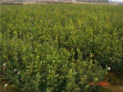 土壤水分测定仪在农田灌溉中的应用效果