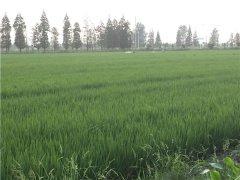 土壤墒情监测系统的应用能减少水资源浪费