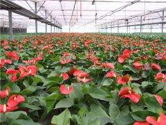 土壤水分速测仪能够检测花卉土壤水分吗?