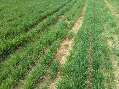 土壤水分蒸发流失对土壤有什么影响?