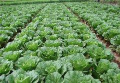 土壤水分速测仪在现代农业中有什么作用?