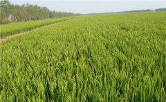 广灵县通过土壤墒情监测系统加强对旱情的预防